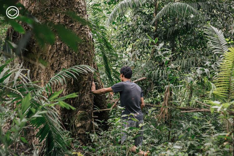 HOSTBEEHIVE : ลิ้มรสเรื่องราวผืนป่าผ่านน้ำผึ้งของชุมชนปกาเกอะญอแห่งเชียงราย