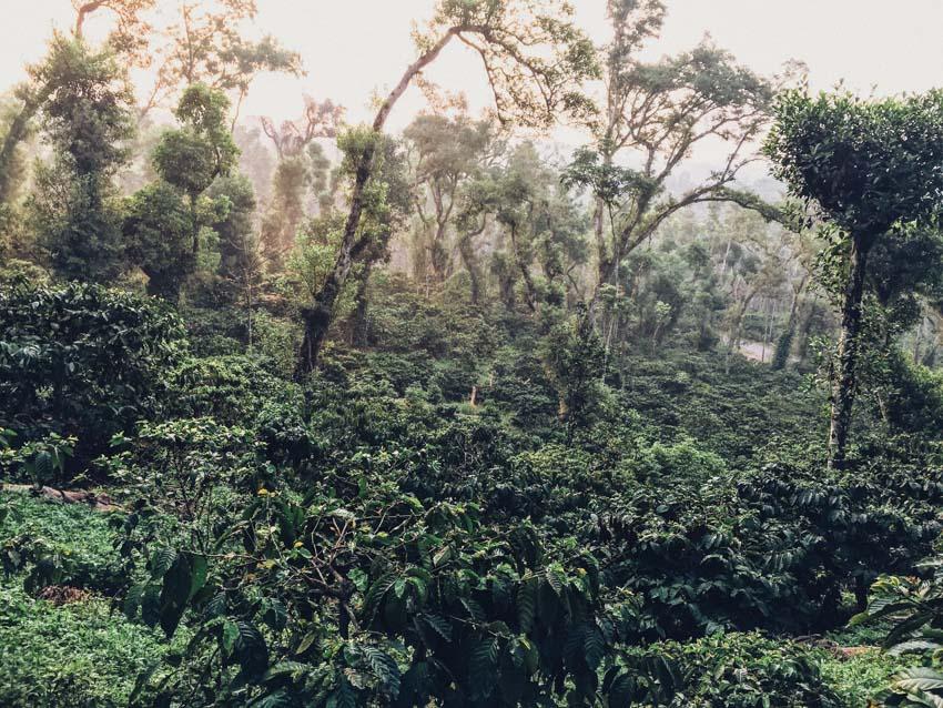 กรุ่นกลิ่นกาแฟอินเดียใต้