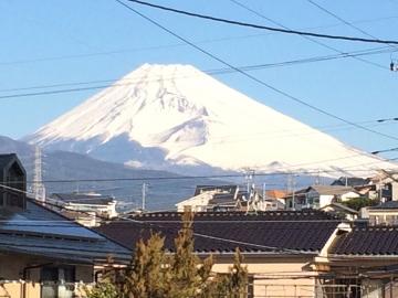 Fuji Everyday