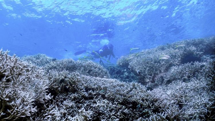Chasing Coral : ปะการังที่สูญหาย เราร้องไห้เงียบงัน