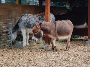 Spitalfields City Farm ฟาร์มสัตว์น้อยๆ ในย่านฮิปของลอนดอน
