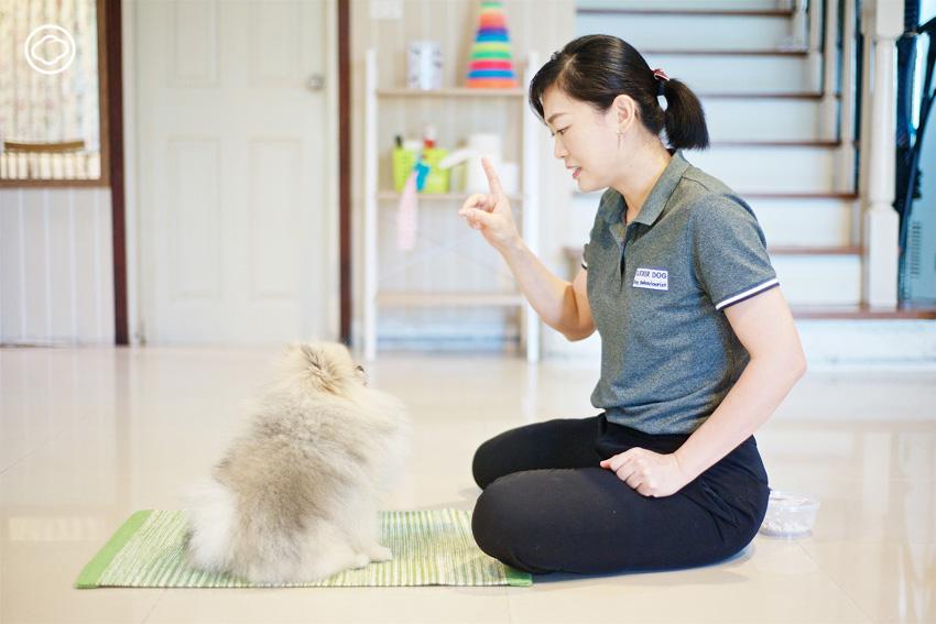 Dog Workout : ชวนหมามาฝึกสมอง สร้างกล้ามเนื้อ กับกิจกรรมออกกำลังกายสนุกในบ้าน