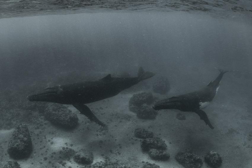 ออกเดตกับนางงามจักรวาฬ ขวัญใจช่างภาพโลกใต้น้ำ