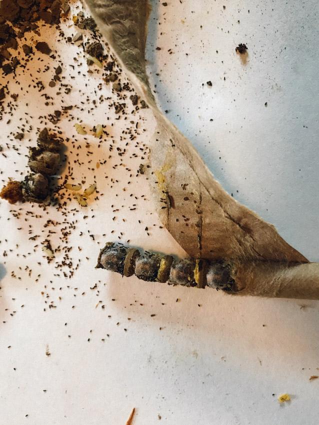 ชวนกันมาเลี้ยงผึ้งท้องถิ่นที่ใจดี แสนขยัน และเป็นความหวังใหม่ของวงการอาหารโลก