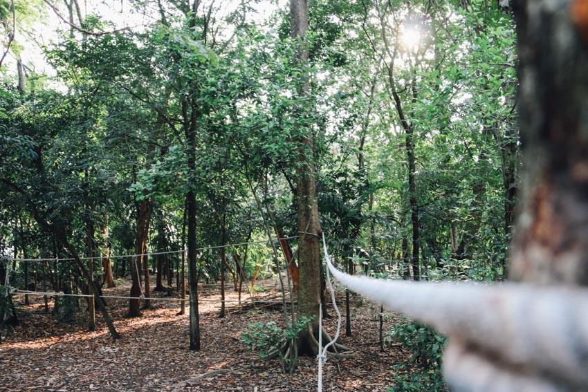 สวนป่า