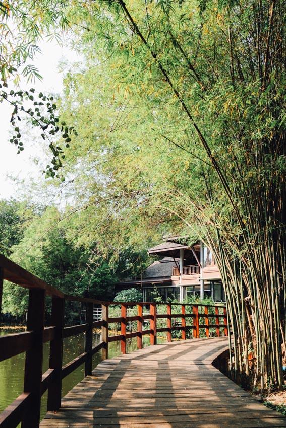 สะพานไม้