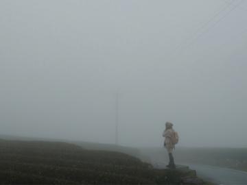 ภาพจำกลางม่านหมอกลึกลับในฤดูหนาวที่อาลีซาน