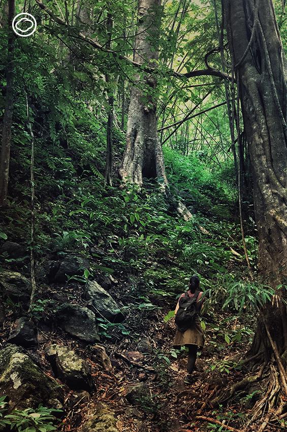 ทริปเดินป่าระยะสั้นเพื่อเรียนรู้ เก็บผัก จับปลาในลำธาร และทำอาหารกันในป่า
