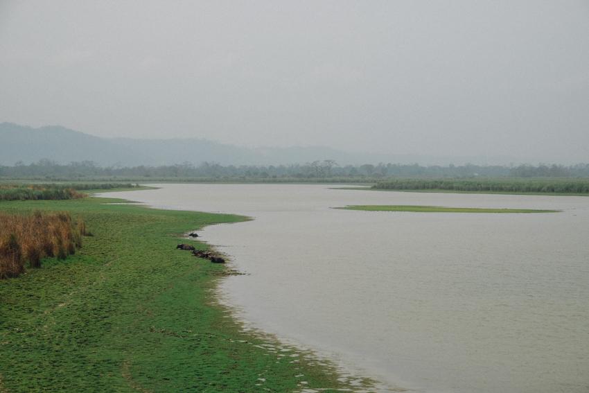 Kaziranga