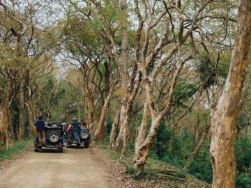 เที่ยวซาฟารีสไตล์อินเดียที่ Kaziranga อุทยานแห่งชาติและแหล่งอาศัยของสัตว์ป่าที่ดีที่สุดในโลก