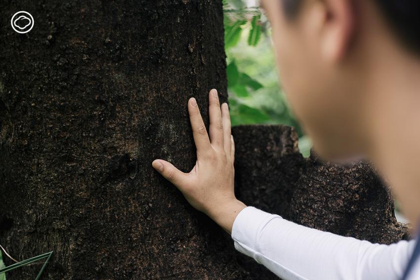 'หมอต้นไม้' และ 'รุกขกร'