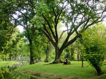 TCP Spirit ครั้งที่ 1 : หมอต้นไม้ สวนลุมพินี