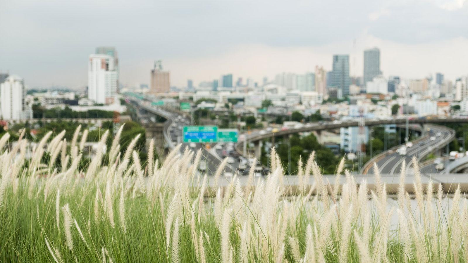 เมื่อดาดฟ้าโรงพยาบาลรามาฯ กลายเป็น 'สวนบำบัดลอยฟ้า' ใหญ่สุดในไทยที่ช่วยบำบัดทั้งคนและเมือง