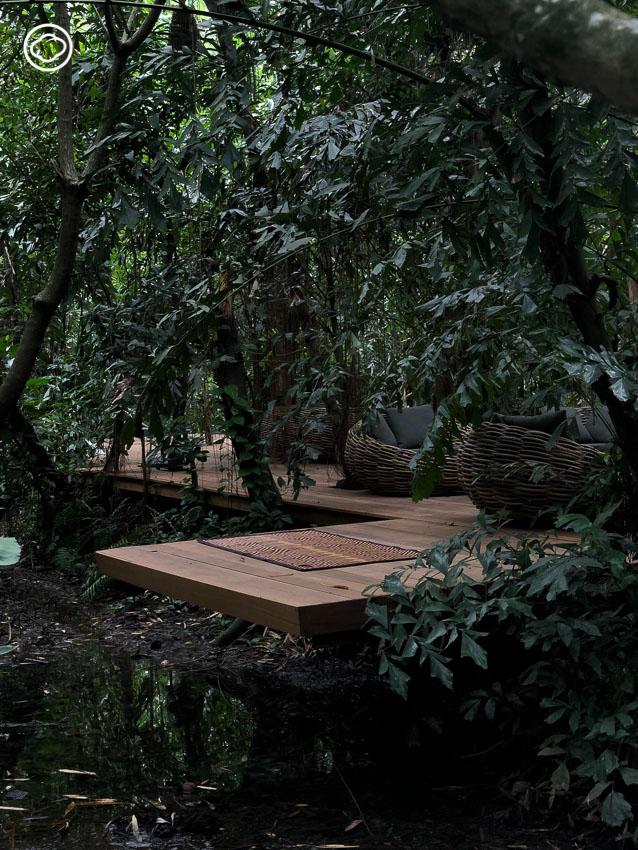 นั่งจิบชา ทานขนม กลางสวนไผ่ในท้องร่อง โซนใหม่ล่าสุดของ Little Tree Garden Cafe