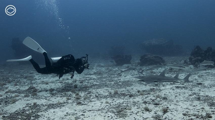 การเดินทางฝ่าพายุไปเกาะโลซินเพื่อหา 'โรนัน' ปลาหายากแห่งทะเลไทย