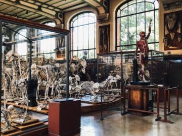 ส่องสารพัดโครงกระดูกที่พิพิธภัณฑ์กายวิภาคศาสตร์ที่ปารีส