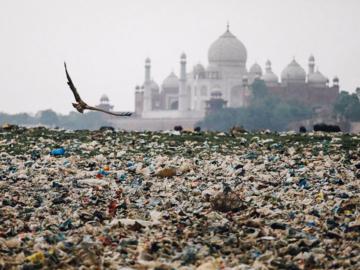 อินเดียกับกฎห้ามใช้ถุงพลาสติก เมื่อสัตว์ศักดิ์สิทธิ์อย่างวัวตายเพราะกินพลาสติกบนถนน