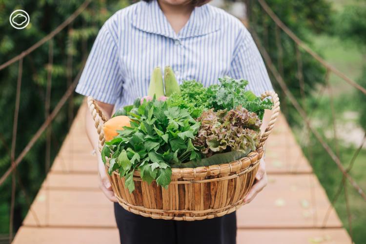 ไร่รื่นรมย์, ศูนย์เรียนรู้และฟาร์มสเตย์ที่สอนการใช้ชีวิตกับธรรมชาติ จ.เชียงราย