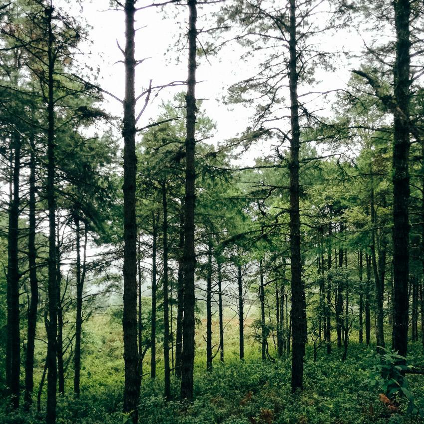 ปกาเกอะญอ, เข้าป่า, หลงป่า, บันทึกการเดินทาง, เดินป่า เชียงใหม่