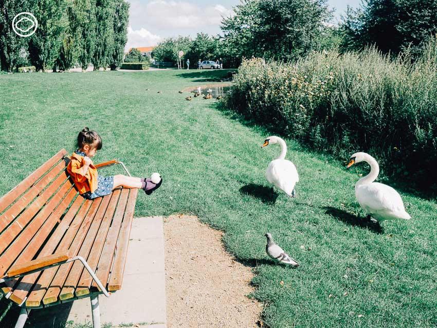 สนามเด็กเล่น, สวนสาธารณะ, เด็ก, ต่างประเทศ, โคเปนเฮเกน, เดนมาร์ก, ชื่นใจ ภูมิรัตน, Valby Nature Playground, เขา, ฤดูร้อน, หงส์