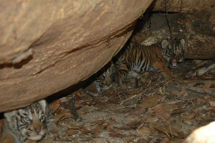 สืบ นาคะเสถียร, วันสืบนาคะเสถียร, สัตว์ป่าไทย, การล่าสัตว์ป่า, ปริญญากร วรวรรณ
