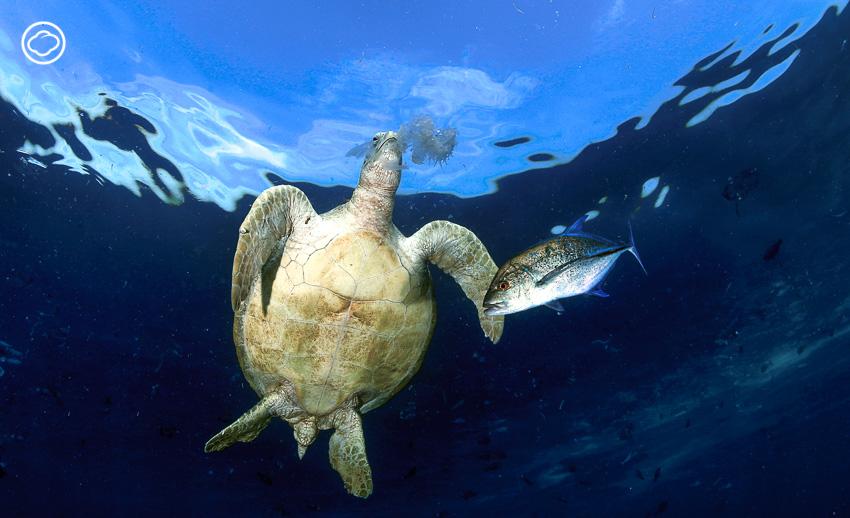 ขยะ พลาสติก, ภาพใต้น้ำ, ช่างภาพใต้น้ำ, วาฬ