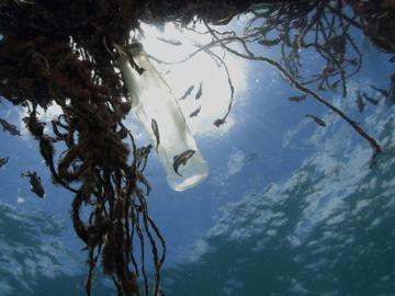 การเดินทางไปเกาะห่างไกลของช่างภาพใต้น้ำระดับโลก ที่พบว่าขยะพลาสติกเดินทางไปถึงทุกที่