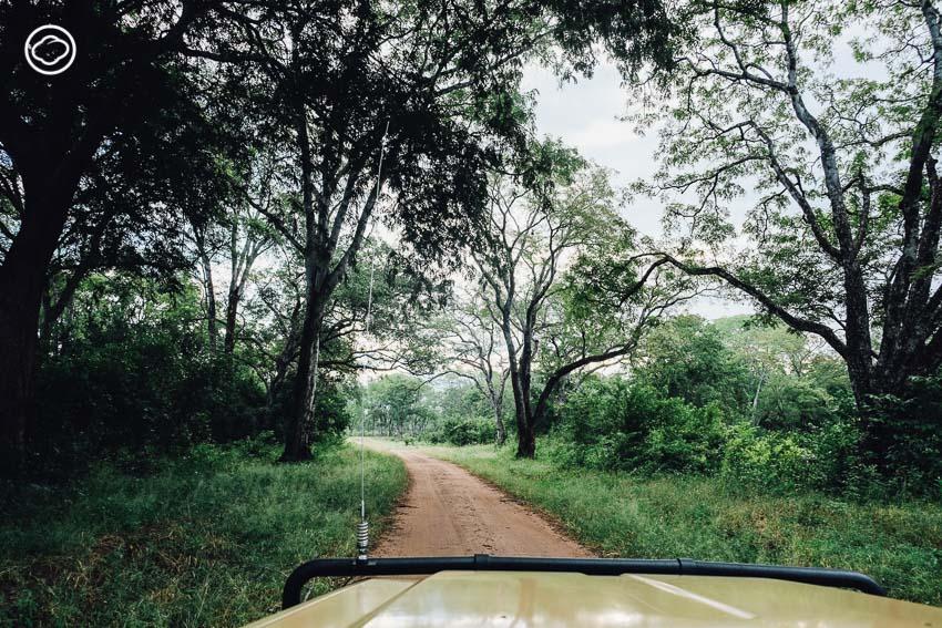 ซาฟารี, สวนสัตว์, Zambia Safari, ประเทศแซมเบีย