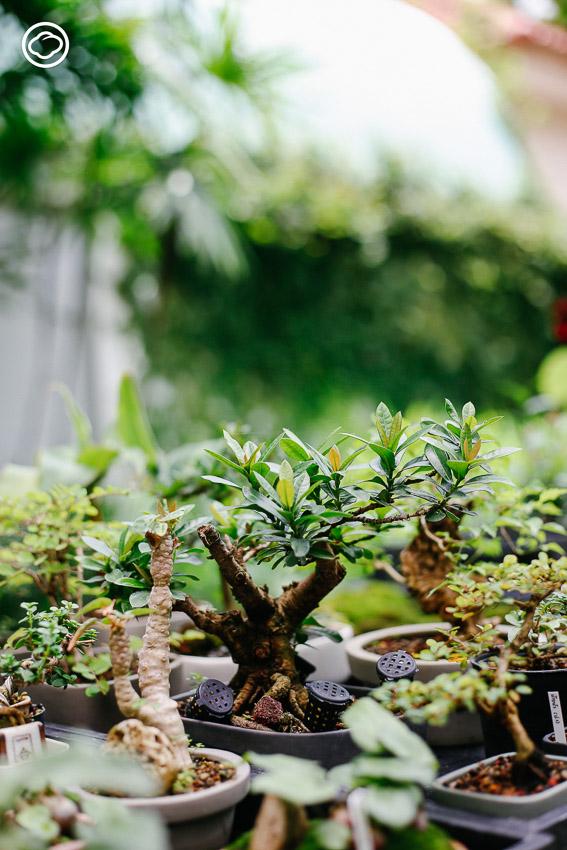 miNATURE_c, ต้นไม้จิ๋ว, ต้นไม้สายย่อ