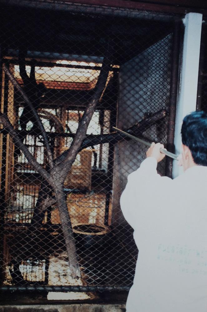 สวนสัตว์ดุสิต, เขาดิน