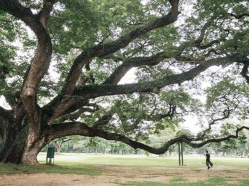หมอต้นไม้