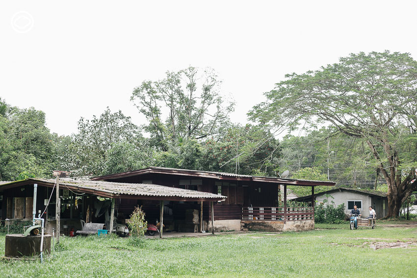 สวนมังคุด, สวนบ้านแม่ พังงา