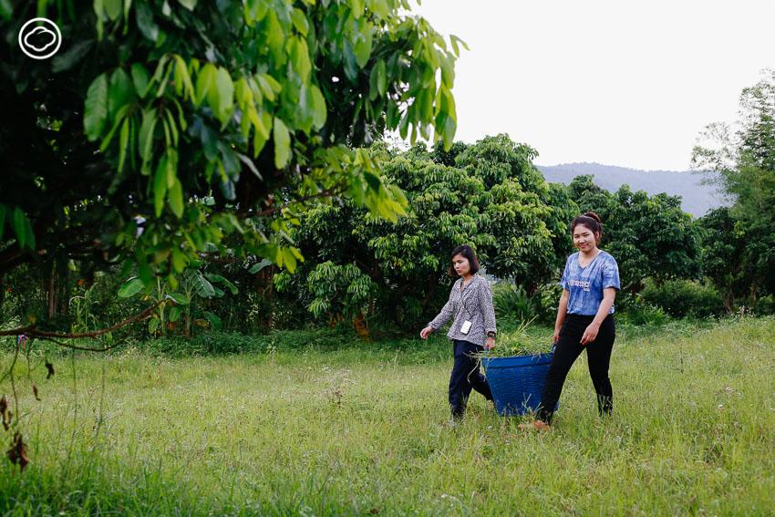 สวนพันพรรณ, โจน จันได