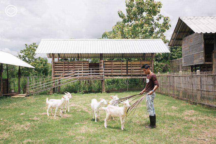 บุญบูรณ์ฟาร์ม, ฟาร์มแพะนม