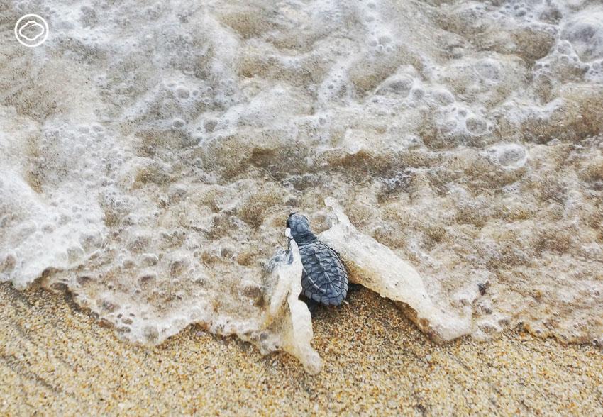 เต่าทะเล