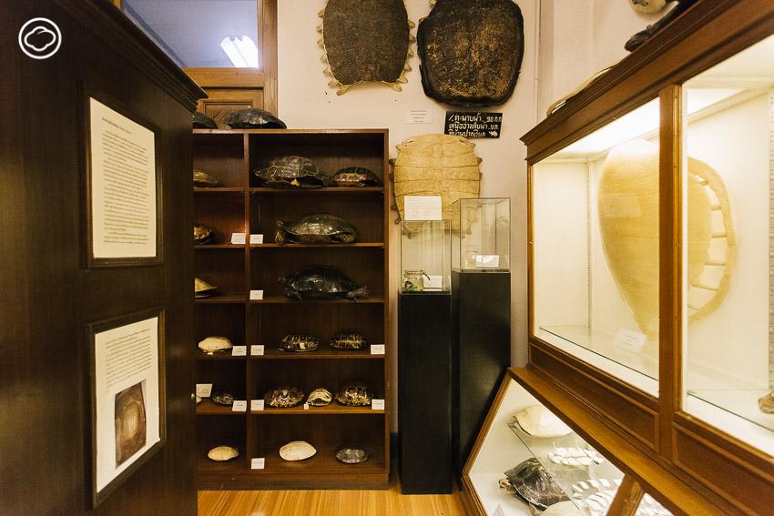 พิพิธภัณฑสถานธรรมชาติวิทยา