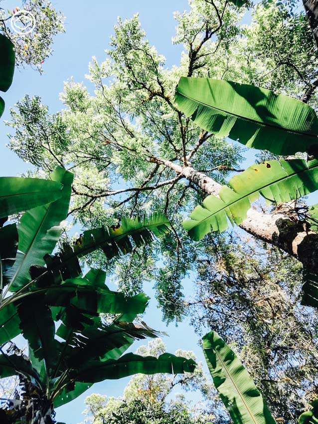 ป่า, Deep Ecology