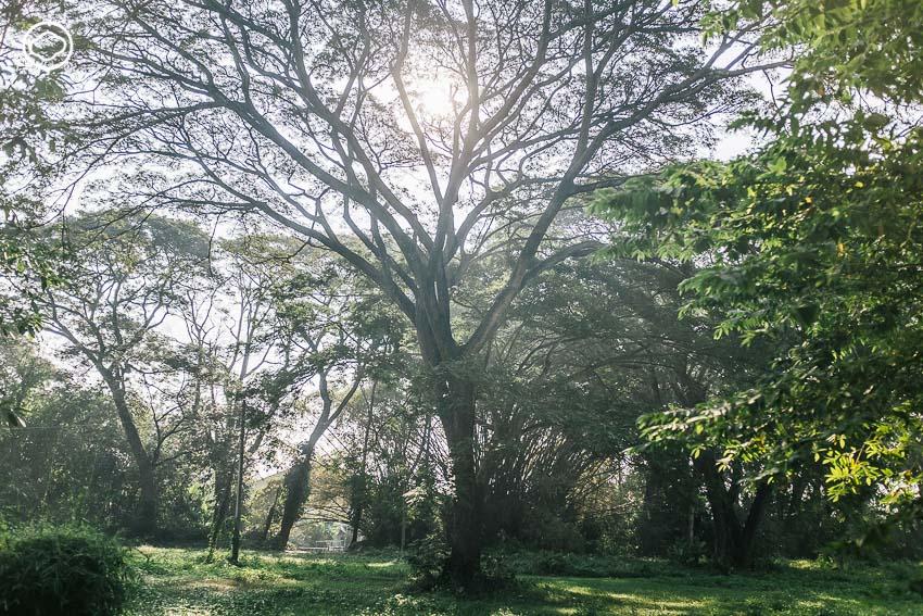 McKean Park, สวนแมคเคน