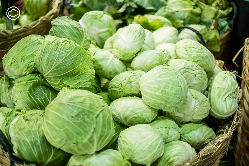กะหล่ำ, King's Cabbage