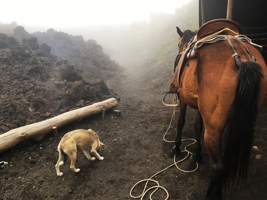 ภูเขาไฟปากายา, ประเทศกัวเตมาลา