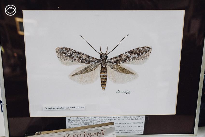 วิชัย มะลิกุล, Smithsonian
