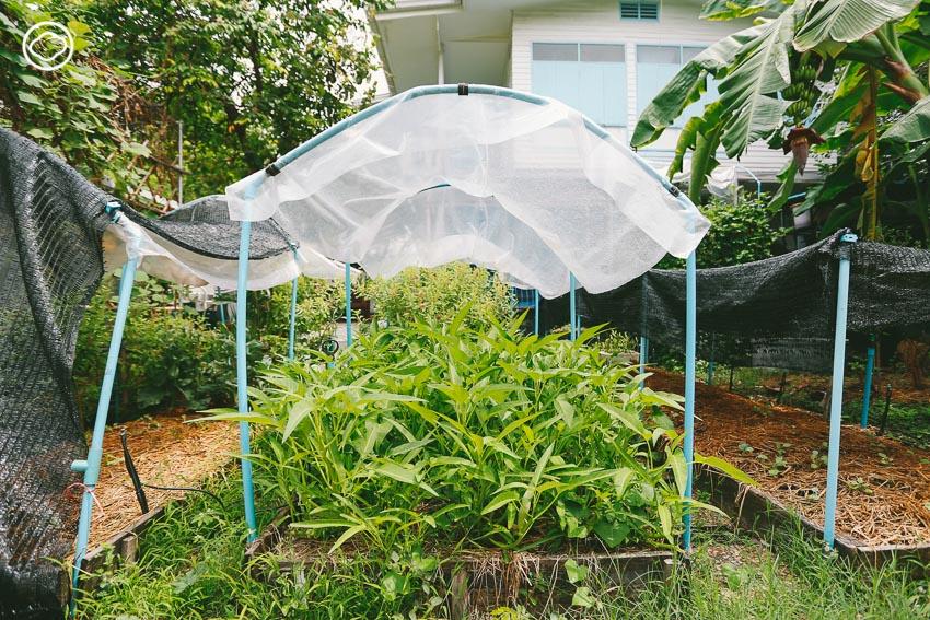 สวนผักบ้านคุณตา