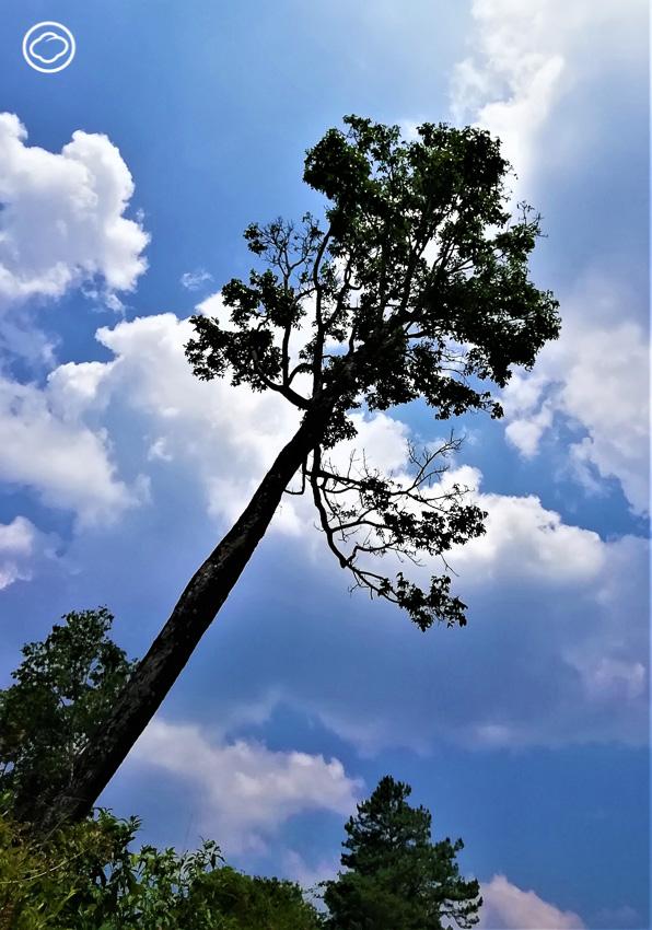 ต้นสะดือ, ปกาเกอะญอ