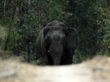 ภาพ 7 สัตว์ป่า หายากที่ โน้ต วัชรบูล ลี้สุวรรณ เดินเท้าเข้าป่าไปนำมาเล่าผ่านเลนส์