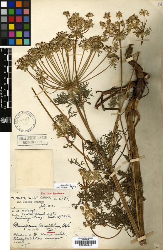 The Cloud Studio 05 : Herbarium