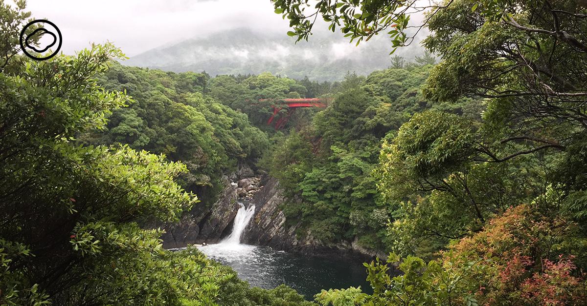 ป่ายากุชิมะ อดีตที่สัมปทานไม้ที่ถูกอนุรักษ์จนเป็นอุทยานสำคัญของญี่ปุ่น