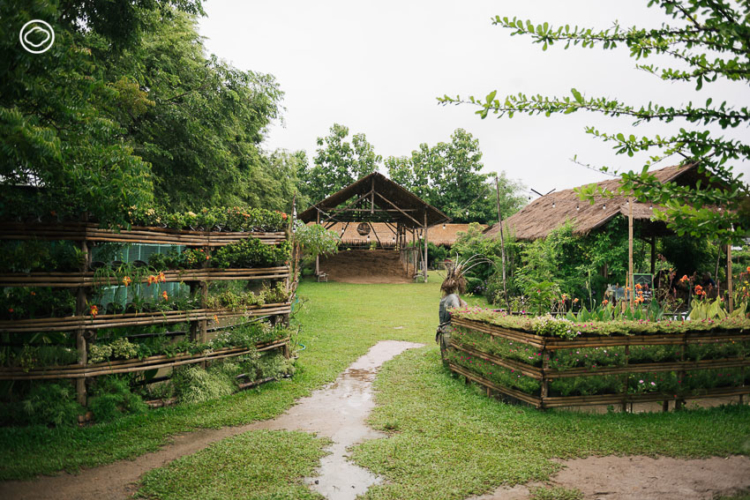 Ginger Farm Chiangmai