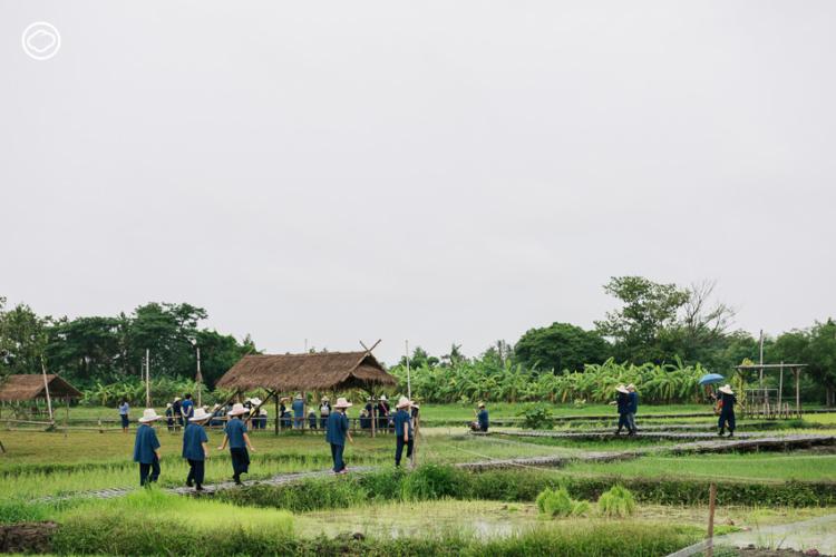 Organic Tourism