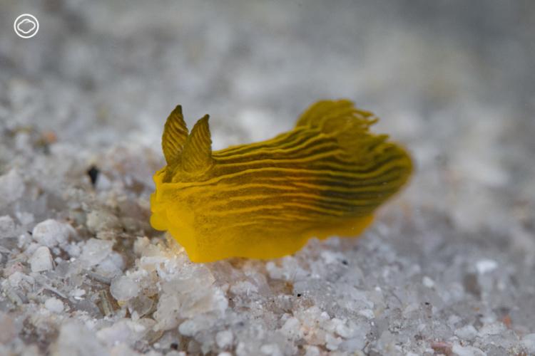 เปิดลายแทงล่าขุมทรัพย์ใต้ท้องทะเลเพื่อค้นหาสิ่งมีชีวิตหลากสีสันที่ซ่อนตัวอยู่ในแนวประการัง