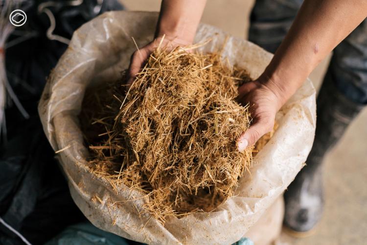 ฟาร์มอินทร์แปลง ฟาร์มโคนม Zero-waste หนึ่งเดียวในไทยที่ผลิตนมพาสเจอร์ไรซ์ด้วยพลังงานขี้วัว